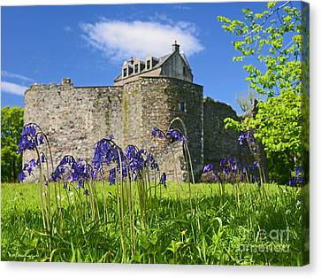 Scots Spring Bluebell Flowers At Scotland Dunstaffnage Castle  Canvas Print
