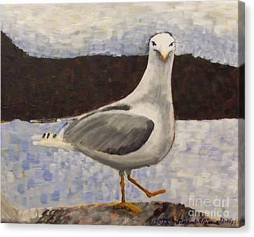 Scottish Seagull Canvas Print