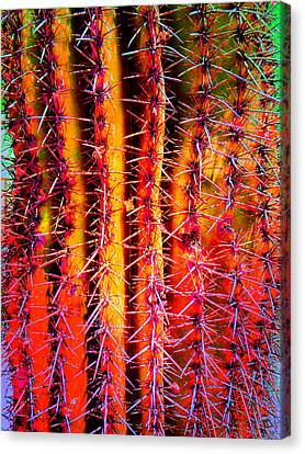 Scottsdale Saguaro Canvas Print by Michelle Dallocchio