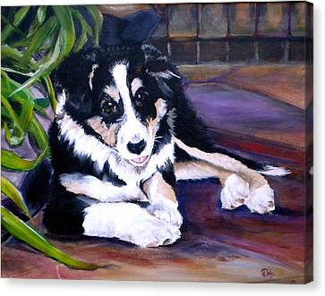 Scout Canvas Print by Debi Starr
