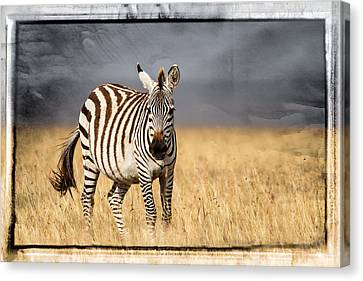 Scratched Tin Zebra Canvas Print