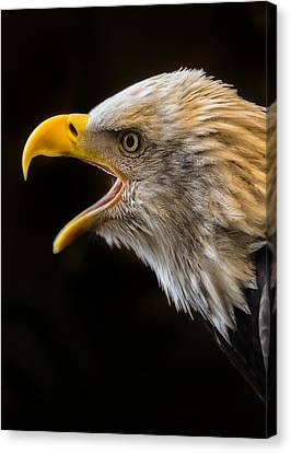 Scream For Freedom Canvas Print by Bill Tiepelman