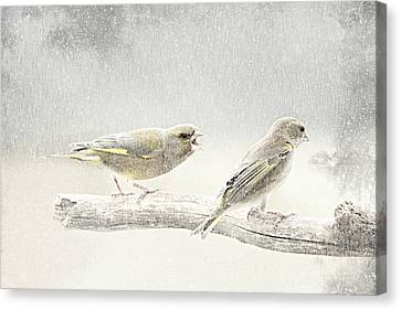 Delicate Canvas Print - Screamers In The Snow by Heike Hultsch