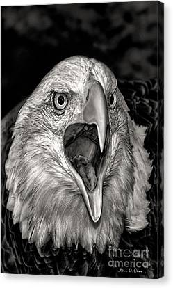 Screamin Eagle Canvas Print