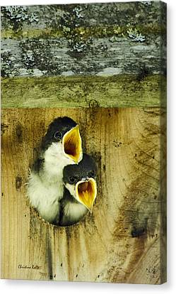 Screaming Hungry Canvas Print by Christina Rollo