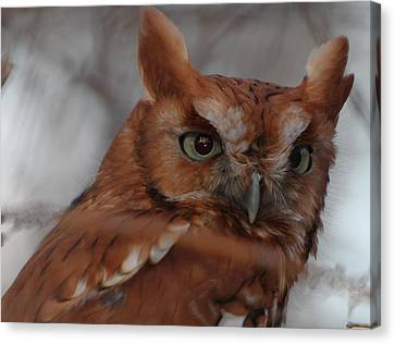 Canvas Print featuring the photograph Screech Owl by Constantine Gregory