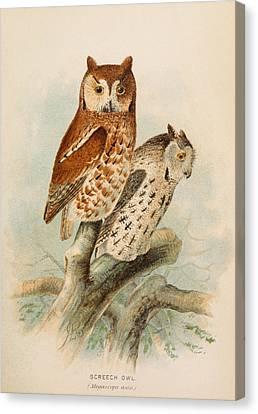 Screech Owls Canvas Print by Rob Dreyer