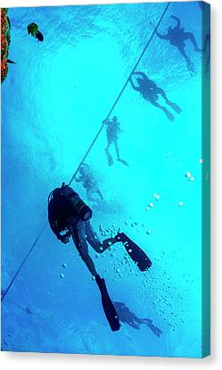 Scuba Diving Canvas Print by Louise Murray