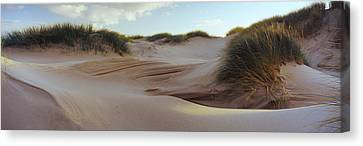 Sculpted Dunes At The Sands Of Forvie Canvas Print by Panoramic Images