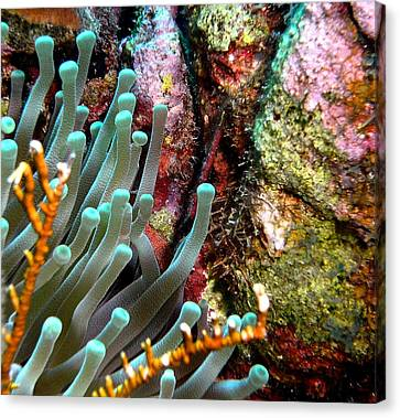 Sea Anemone And Coral Rainbow Wall Canvas Print by Amy McDaniel
