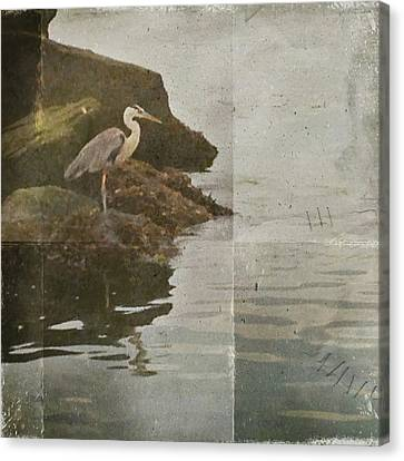 Canvas Print featuring the photograph Sea Bird by Kevin Bergen