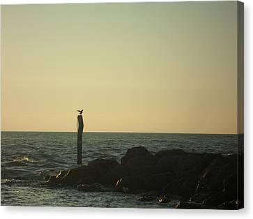 Sea Bird Landing Canvas Print
