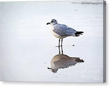 Canvas Print featuring the photograph Sea Birds No.1 by Melissa Sherbon
