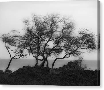 Canvas Print featuring the photograph Sea Breeze 1 by Jim Snyder