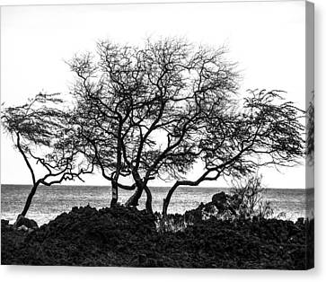 Canvas Print featuring the photograph Sea Breeze 3 by Jim Snyder