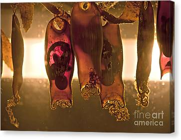 Sea Creature Pictures- Shark Eggs Canvas Print by Artist and Photographer Laura Wrede