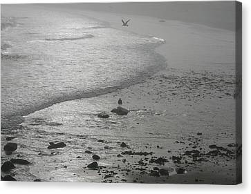 Seagull Canvas Print - Sea Farewell by Neal Eslinger