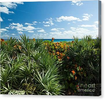 Sea Grapes And Saw Palmetto Canvas Print