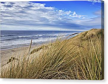 Sea Grass And Sand Dunes Canvas Print