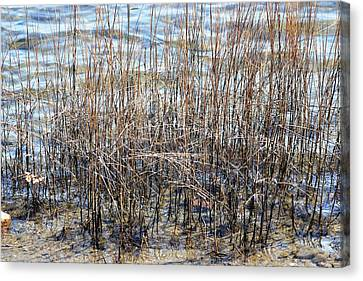Canvas Print featuring the photograph Sea Grass by Judy Palkimas