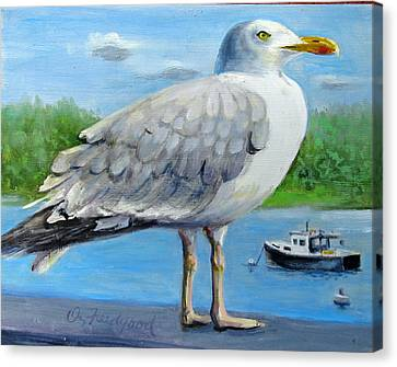 Sea Gull On Alert Canvas Print by Oz Freedgood