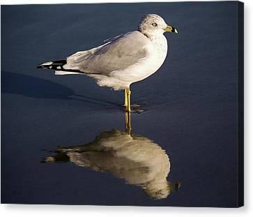Sea Gull Reflection Canvas Print by Paulette Thomas