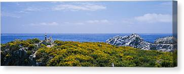 Sea Gulls Perching On Rocks, Point Canvas Print by Panoramic Images