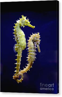 Sea Horse Canvas Print by Boon Mee