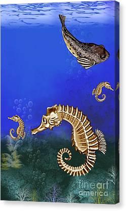 Sea Horse Canvas Print by Karen Sheltrown