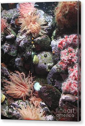 Canvas Print featuring the photograph Sea Life by Chris Anderson