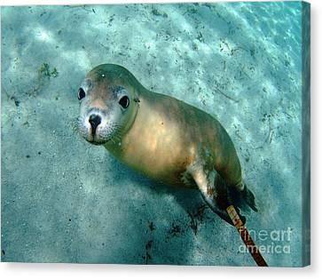 Sea Lion On The Seafloor Canvas Print by Crystal Beckmann
