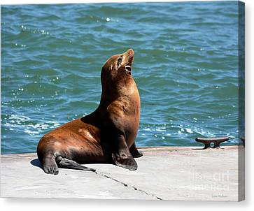 Sea Lion Posing On Boat Dock Canvas Print