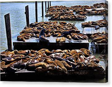 Sea Lions At Pier 39  Canvas Print by Garry Gay