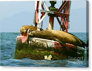 Sea Lions Floating On A Buoy In The Pacific Ocean In Dana Point Harbor Canvas Print by Artist and Photographer Laura Wrede