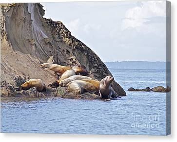 Sea Lion's Napping Canvas Print by Tracey Levine