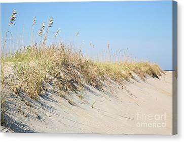 Sea Oat Serenity Canvas Print by Suzi Nelson