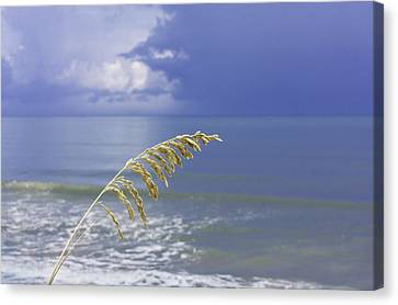 Sea Oats Ahead Of The Storm Canvas Print
