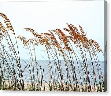 Sea Oats And Serenity Canvas Print