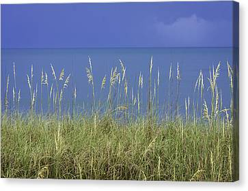 Sea Oats By The Blue Ocean And Sky Canvas Print by Karen Stephenson