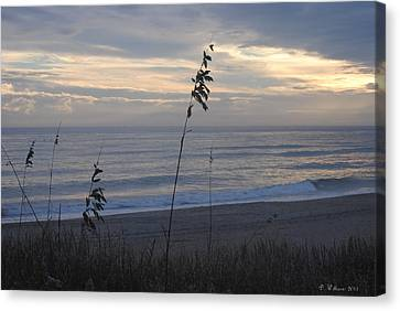 Sea Oats Canvas Print by Dan Williams