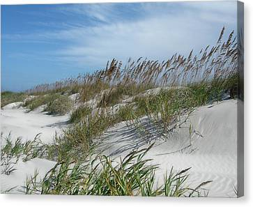 Canvas Print featuring the photograph Sea Oats by Ellen Tully
