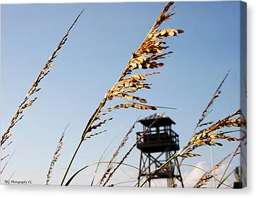 Sea Oats Canvas Print by Marty Gayler