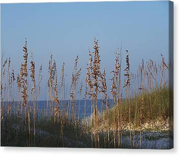 Canvas Print featuring the photograph Sea Oats by Michele Kaiser