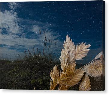 Canvas Print featuring the photograph Sea Oats by Randy Sylvia
