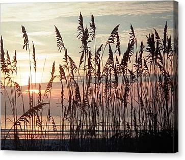 Fabulous Blue Sea Oats Sunrise Canvas Print