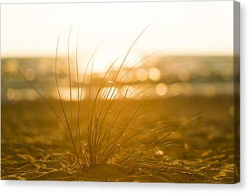 Sea Oats Sunset Canvas Print by Sebastian Musial