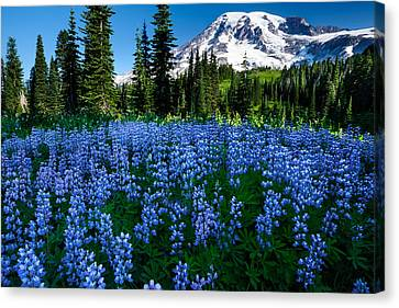 Sea Of Blue Canvas Print
