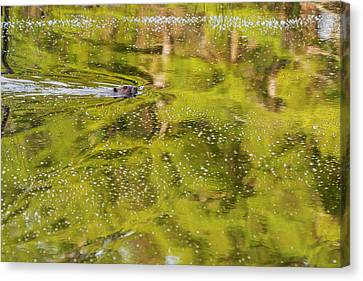 Sea Of Green Canvas Print