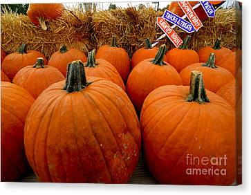 Sea Of Pumpkins Canvas Print by Amy Cicconi