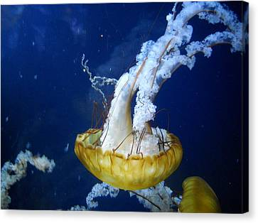 Sea Orchid Canvas Print